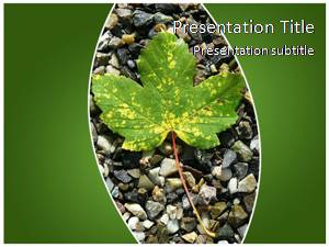 Maple Leaf Free Ppt Template Slide1