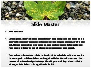 Maple Leaf Free Ppt Template Slide2