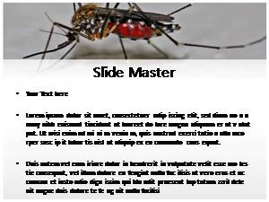 Mosquito free powerpoint template and background mosquito free ppt template toneelgroepblik Gallery