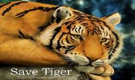 Save Tiger Save Earth PowerPoint Presentation
