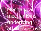 Mechanical mechanisms underlying atherosclerosis Powerpoint Presentation