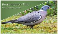 Pigeon Free Ppt Template