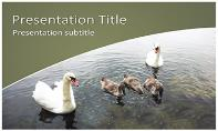 Swans Free Ppt Template