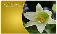 Whilte Tulip Free Ppt Template