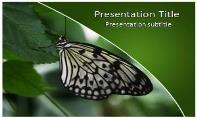 Butterfly Free Ppt Template