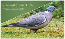 Pigeon Free Ppt Templates