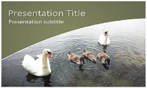 Swans Free Ppt Templates