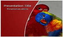 Rainbow Lorikeet Free Ppt Templates