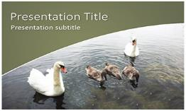 Swans Free Powerpoint Template