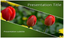 Tulips Free Powerpoint Template