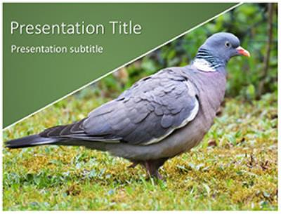 Pigeon Free PowerPoint Template