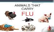 Animals That Carry Flu Powerpoint Presentation