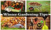 Winter Gardening Tips Powerpoint Presentation