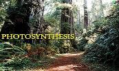 Plant Photosynthesis Powerpoint Presentation