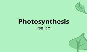 Photosynthesis Sbi Powerpoint Presentation