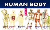 The Body Powerpoint Presentation