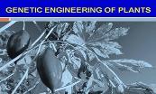 Genetic Engineering of Plants Powerpoint Presentation