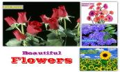 Beuatiful Flowers Powerpoint Presentation