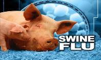 Swine Flu PowerPoint Presentation