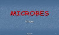 Microbes PowerPoint Presentation