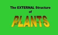 Plant Part Roots PowerPoint Presentation