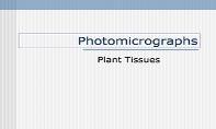 Plant Tissues PowerPoint Presentation