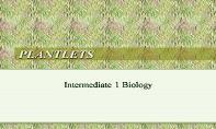 Plantlets PowerPoint Presentation