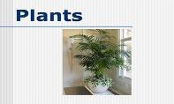 Plants PowerPoint Presentation