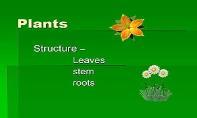 Plants General Structure PowerPoint Presentation