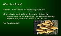 Plants Why Study Them PowerPoint Presentation