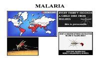 Protists Malaria PowerPoint Presentation