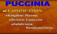 Puccinia Fungus PowerPoint Presentation