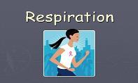 Respiration PowerPoint Presentation