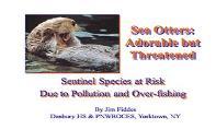Sea Otter PowerPoint Presentation
