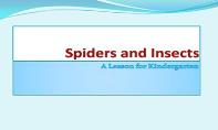 Spiders And Insects PowerPoint Presentation
