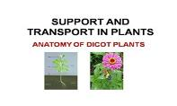 Support And Transport In Plants PowerPoint Presentation