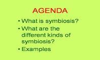 Symbiosis PowerPoint Presentation