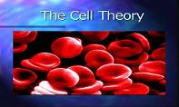 The Cell Theory PowerPoint Presentation