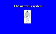 The Nervous System & Sensitivity PowerPoint Presentation