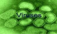 Viruses And Hiv PowerPoint Presentation