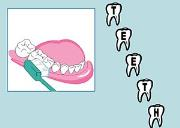 Types of Teeth Powerpoint Presentation