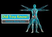 Human Body Facts Powerpoint Presentation