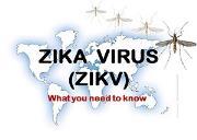 Zika Virus Zikv Powerpoint Presentation