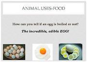 Animal Uses Food Powerpoint Presentation