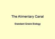 The Alimentary Canal Powerpoint Presentation