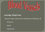 Blood Vessels Powerpoint Presentation