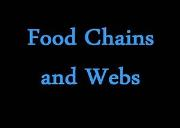 Food Chains And Webs Powerpoint Presentation