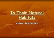In Their Natural Habitats Powerpoint Presentation