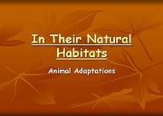In Their Natural Habitats Powerpoint Presentation