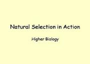 Natural Selection In Action Powerpoint Presentation